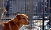 Cati caini maidanezi au fost prinsi in Bucuresti din septembrie 2013 pana in prezent