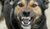 Inca un copil a fost muscat de un caine maidanez in Bucuresti