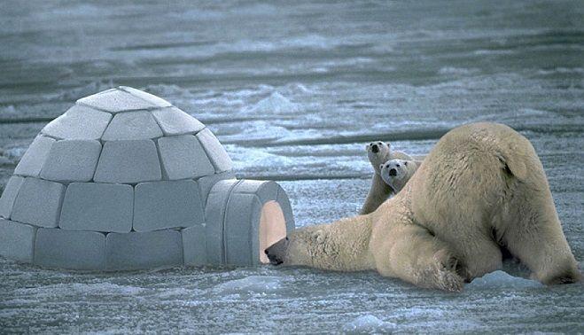 Ursul polar si gloantele. Bancul zilei