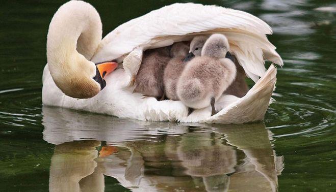 FOTOGRAFII cu cele mai frumoase animale in postura de parinti