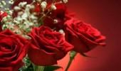 8 MARTIE – ZIUA INTERNATIONALA a FEMEII. Cele mai frumoase MESAJE de 8 Martie!
