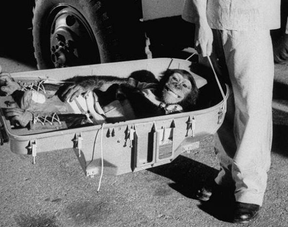 Intoarcerea pe Pamant a cimpanzeului care a zburat 16 minute in spatiu, 1961