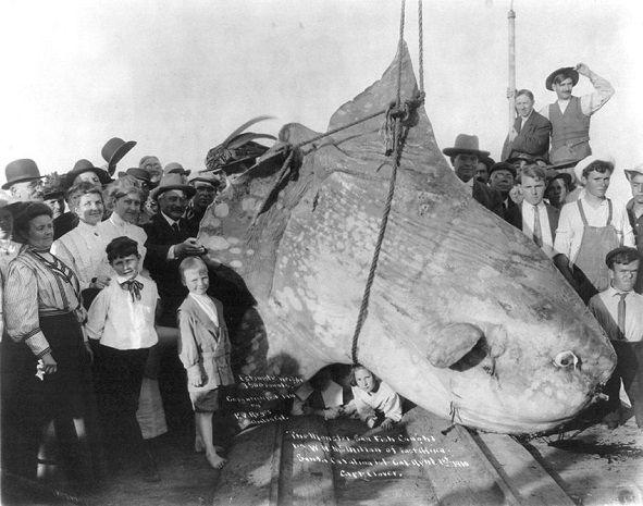 Oameni pozand cu un peste enorm de 1.587 tone, 1910