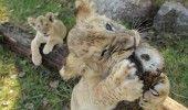 4 OCTOMBRIE – ZIUA INTERNATIONALA A ANIMALELOR