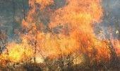 INCENDIU PUTERNIC intr-o padure din judetul Buzau. Pompierii si localnicii vor supraveghea zona peste noapte