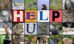 Jumatate dintre speciile Pamantului vor fi in pericol de disparitie pana la fina…