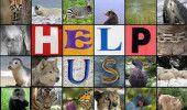 Jumatate dintre speciile Pamantului vor fi in pericol de disparitie pana la finalul secolului