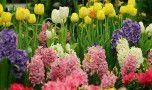 Aproximativ 1,4 milioane de români își serbează onomastica de Florii