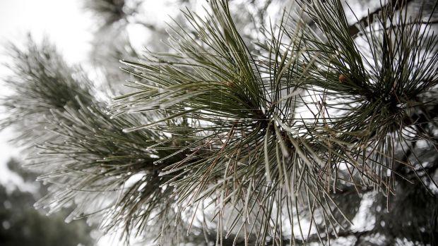Care sunt cauzele temperaturilor de primăvară în plin miez de iarnă