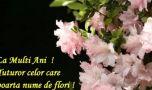 Mesaje de Florii. Cele mai frumoase mesaje, urări și sms-uri de Florii