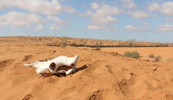 Alertă! Sahara se extinde încet dar sigur! Cu cât a crescut deșertul în ultimul secol