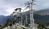 Unde se află cel mai batrân arbore din Europa și ce vârstă are acesta