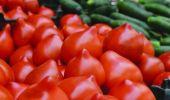 Roșiile țuguiate sunt pe gustul tău? După ce o să citești părerea cercetătorilor o să-ți piară cheful de ele