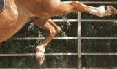 Constanța: Un bărbat este în comă după ce a fost lovit de un cal