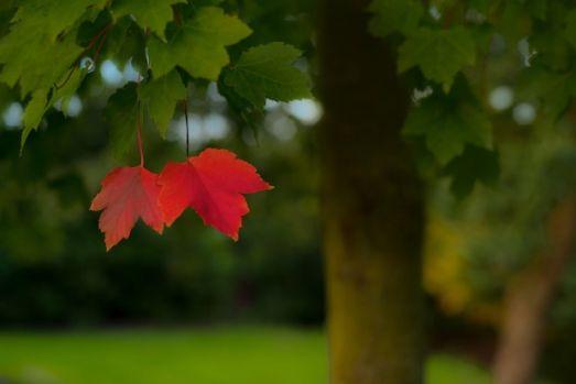 Prognoza meteo pentru luna octombrie. De când scad temperaturile