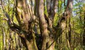 Poarta Iadului se află într-o pădure din România? Oamenii spun că în acest loc lucrurile dispar inexplicabil