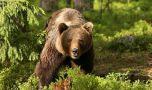 Argeș. Un vânător mușcat de un urs este desfigurat și se află în stare gr…
