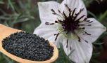 Care este planta despre care Biblia și Coranul spun că poate vindeca orice boa…