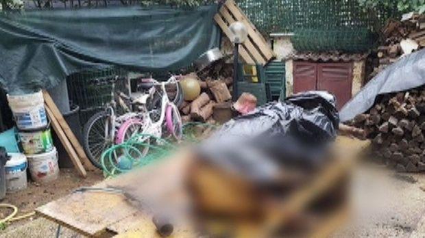 Italia. Românii au tăiat porcul în stil tradiţional, iar acum riscă închisoarea