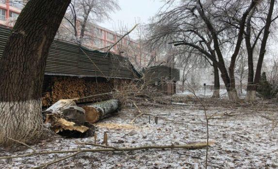 București. Un copac a căzut peste o cafenea de lux! Video