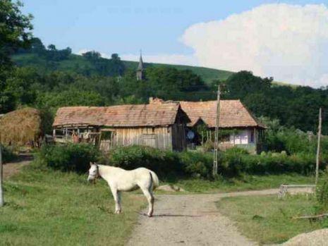 Satul din România decimat de un criminal necunoscut! Seria crimelor rămâne învăluită în mister