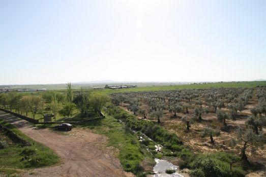 Spania. Un român a ucis cu cruzime un spaniol și l-a abandonat într-o livadă de măslini