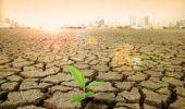 """ONU, OMS și Organizația Mondială a Comerțului avertizează: """"Există un risc de criză alimentară mondială legat…"""