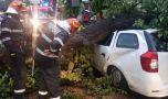 București. Furtuna a făcut ravagii: Zeci de mașini avariate, 37 de copaci au …