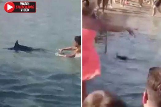 Grecia fierbe! Momentul în care zeci de turiști omoară cu pietre un pește-spadă! Video