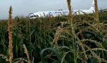 Rusia. Un avion a lovit un stol de pescăruși după decolare și a aterizat for…