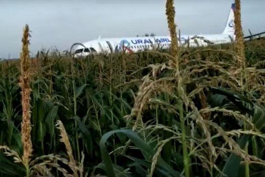 Rusia. Un avion a lovit un stol de pescăruși după decolare și a aterizat forțat în porumb. 23 de răniți! Video