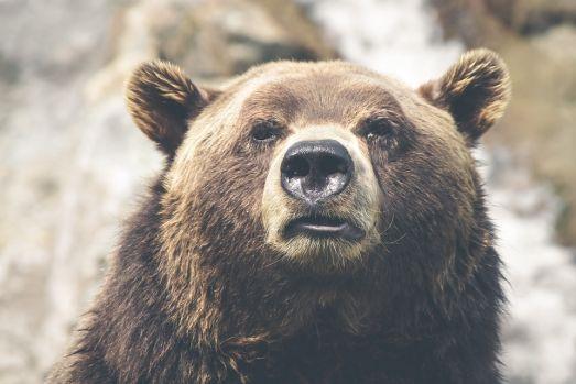 Brașov. Doi copii de 3, respectiv 4 ani, au fost atacați și răniți de un urs!