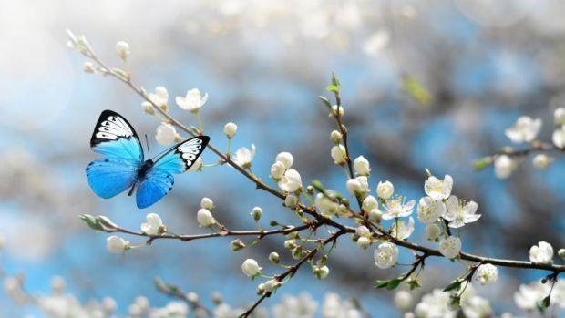 """""""Apocalipsa insectelor"""". 400.000 de insecte ar putea să dispară în viitorul apropiat! Efectele devastatoare asupra omenirii"""