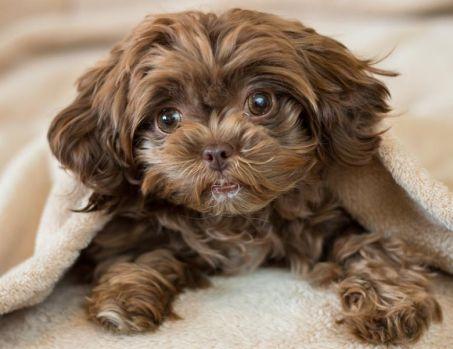 Ce efecte devastatoare are țipatul asupra câinelui tău