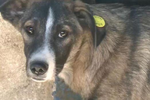 Unde locuiesc și muncesc vietnamezii care au furat și au mâncat un câine românesc