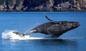 Cele zece lucruri surprinzătoare pe care sigur nu le ştiai despre balene