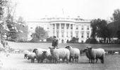 Motivul pentru care Casa Albă a fost botezată astfel! Ce președinte își ținea oile pe peluza Casei Albe?
