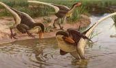 O nouă specie de dinozaur, rudă cu Velociraptorul, a fost descoperită! Avea aripi, dar și coadă ca a unui ghepard
