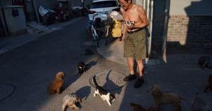 shenzen, china, interdictie, consum, pisica, caine